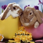 felices pascuas 2 conejos