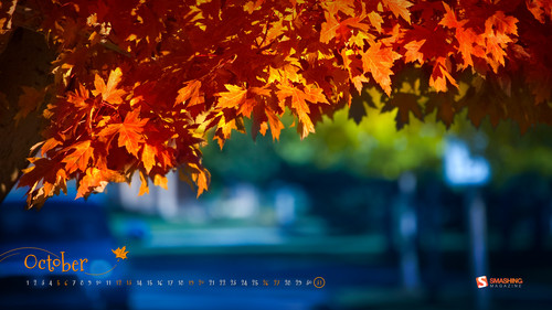 oct-13-fall-colors-preview