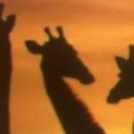 portada de jirafa