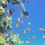 ecosistema acuatico1