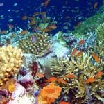 ecosistema acuatico11
