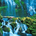 ecosistema acuatico12
