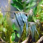 ecosistema acuatico13