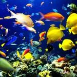ecosistema acuatico3