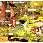 ecosistema_terrestre_01