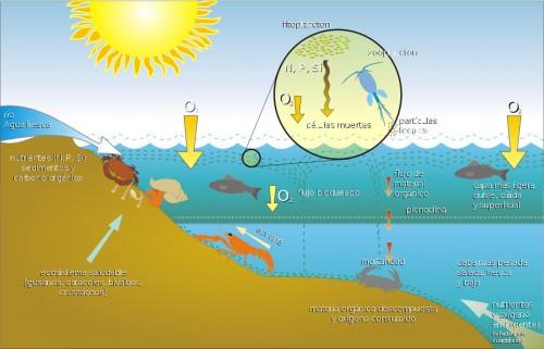 esquema ecosistema acuatico