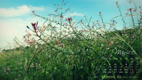 may-15-field-wild-flowers-preview-opt