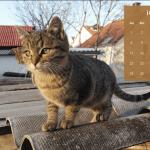 Calendario de enero 2017