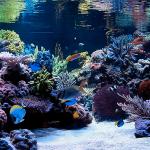 ecosistema-acuático-4