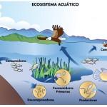 imprimir imágenes de ecosistemas acuáticos-