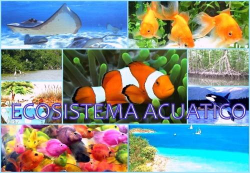 imprimir imágenes de ecosistemas acuáticos