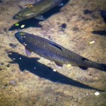 imprimir imágenes de ecosistemas acuáticos.1