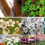 15 Fondos de escritorio de primavera gratis