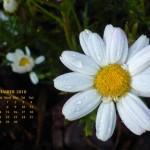 Calendario Mes de Septiembre 2010